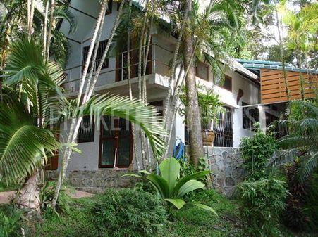 Old palm garden