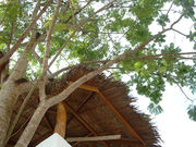 thai sala