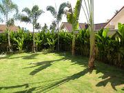 From garden