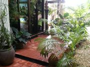 A lot of tropical plants for the entrance