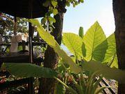 View Garden: